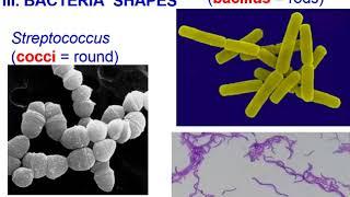 Bacteria:  Archaea vs. Eubacteria  (Theme 4 Topic 2)