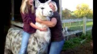 Hannah rides my Llama.