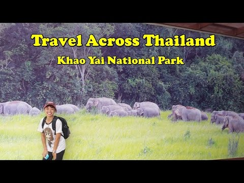 Driving through Thailand Khoa Yai National park