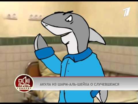 Интервью Малахова у акулы из Шарм-Аль-Шейха. оригинал