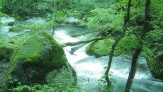 【勉強・睡眠・作業用BGM・癒し・集中力UP】 RELAXING SOUNDS 静かな森の音 川のせせらぎ 小鳥のさえずり