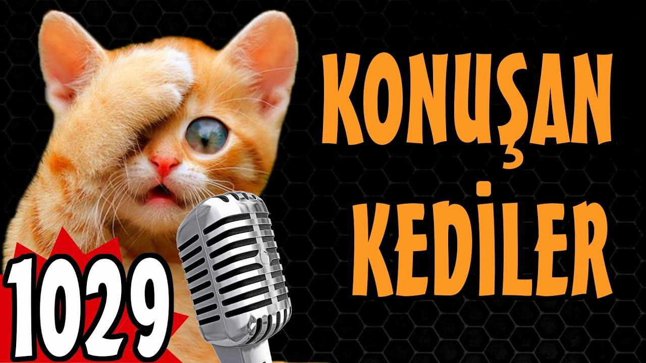 Download Komik ve Sevimli Kedi Videoları - Konuşan Kediler 1029 - En Komik Kedi Videoları