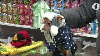 Собачья одежда: мода или необходимость? / Доброе утро, Приднестровье!