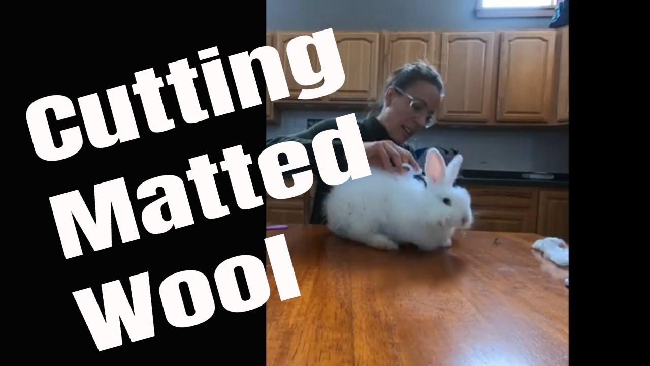 Cutting Matted Wool
