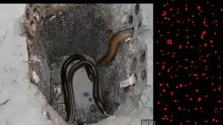Best idea for catch fish 2017 with plastic  pipe hole fish trap   HOW TO CATCH FISH IN CAMBODIA