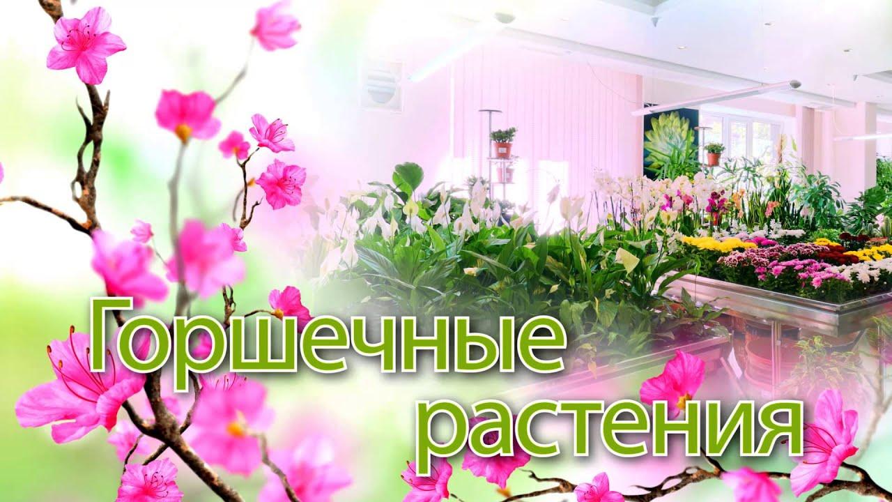 Обзор ЖК Венский квартал в Астане, район Алматы - YouTube
