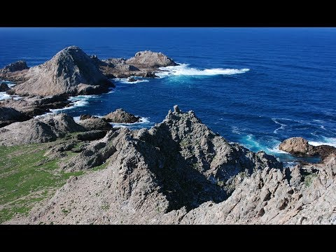 Farallon Islands Live Web Cam   California Academy of Sciences