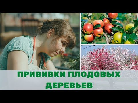 Прививка плодовых деревьев весной руководство к действию