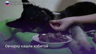Собаку поводыря нашли избитой в мусорном баке в Самарской области
