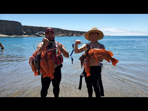 Fishing With Mola Mola & Dolphins (Catch & Cook BIG Vermillion Rockfish)