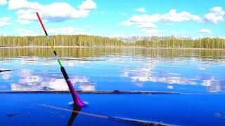 ПОДНЯЛО ПОПЛАВОК ЭТО КАРАСЬ Рыбалка на лесном пруду Ловля карася на поплавочную удочку в мае