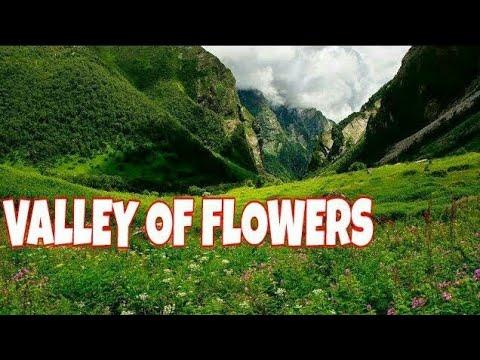 | valley of flowers | by uttarakhanddevdarshan