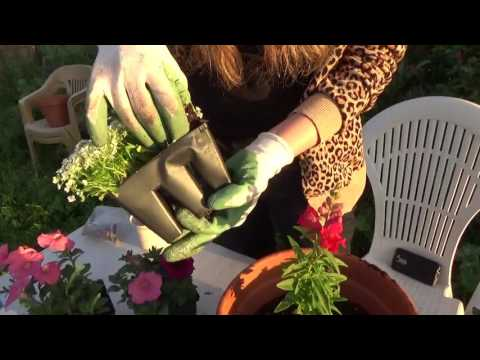 HOW TO PLANT A FLOWER COLOR BOWL!