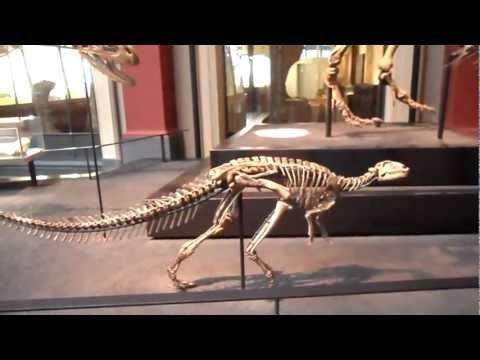Natural History Museum in Berlin - dinosaurus