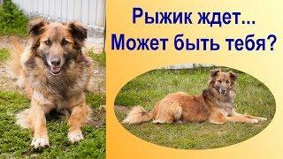 Грустная история бездомной собаки