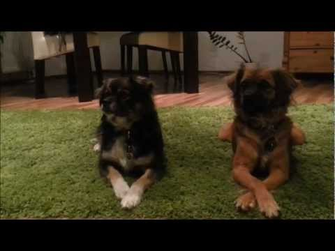 vlog grundlagen der hundeerziehung was muss ich beim training mit meinem hund beachten youtube. Black Bedroom Furniture Sets. Home Design Ideas