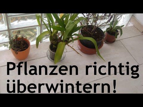 Wie man Topf- bzw. Kübelpflanzen richtig überwintert!