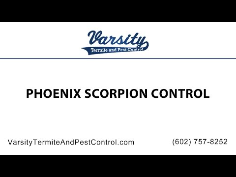 Phoenix Scorpion Control by The Varsity Team