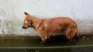 Пес уснул стоя  прикол, ржака, 100500, страх, жесть, вдв, драка, фильм, секс, подборка, секс, камеди