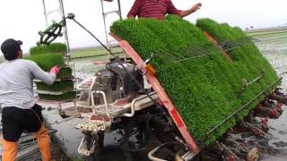 Amazing rice planting machine