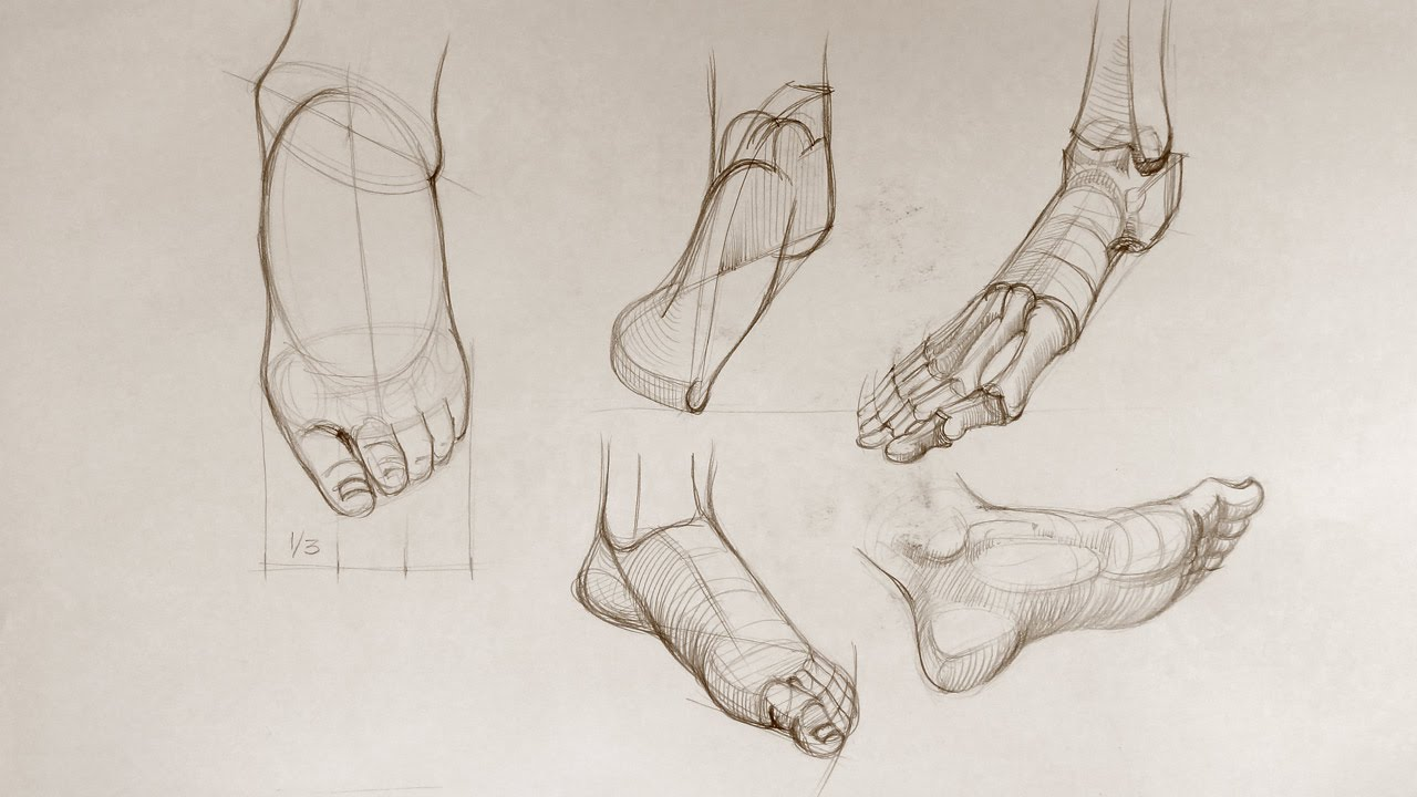 Foot Anatomy - Anatomy Master Class - YouTube