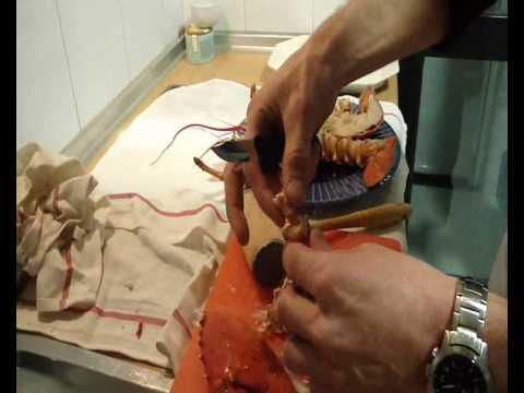 Como preparar un bogavante youtube for Como cocinar un bogavante