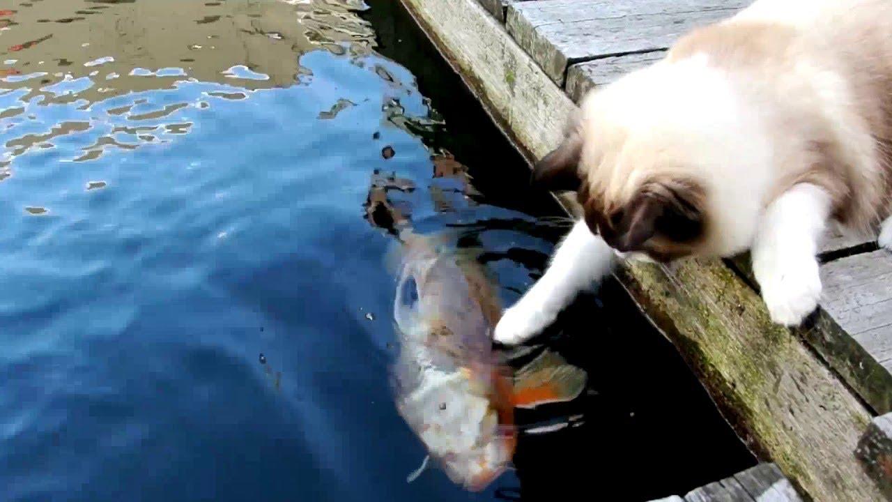 Cat Loves Fish