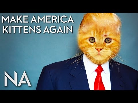 Replace Trump with Kittens in this Chrome Extension