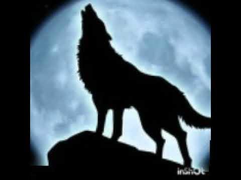 Wolf Sound Scary Sound Youtube