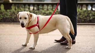 Train Your Dog. Enjoy Your Walk.
