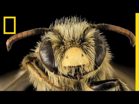 The Bee-utiful World of an Unconventional Scientist | National Geographic