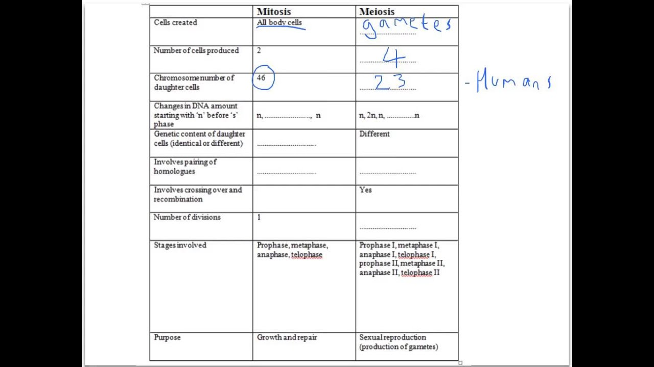 Worksheets Comparing Mitosis And Meiosis comparing mitosis and meiosis youtube meiosis