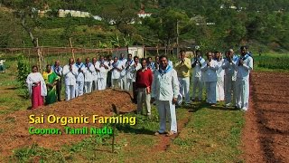 Sai Organic Farming, Coonor, Tamil Nadu, India