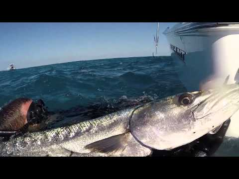 R Tower Clear Dive Lobsters, Gulf of Mexico from YouTube · High Definition · Duration:  58 seconds  · 772 views · uploaded on 31.12.2014 · uploaded by Collier Television