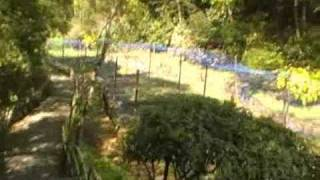 Meiji Jingu Inner Garden part 2