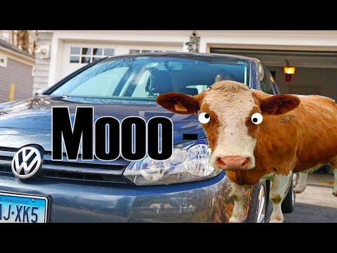 Greatest car accessory ever - Animal sound siren