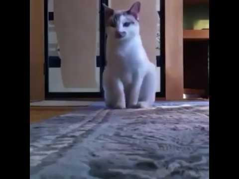 Dilenci Kedi - bana para ver