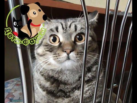 Агрессивный кот. Почему кот царапается и кусается?