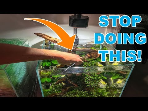 BIGGEST TIP FOR NEW AQUARIUM PLANTS!