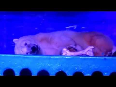 The Crying Polar Bear