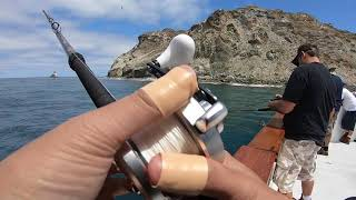 Native Sun Sportfishing Catalina Island DFW license check
