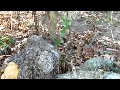 formsan-nest-found-in-a-tree-in-james-island-south-carolina