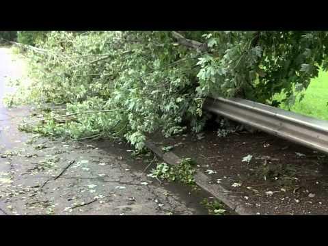Irene Aftermath: Pelham Bay Park Edition