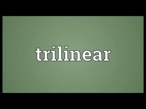 Header of trilinear