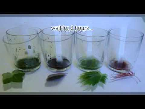 an experiment to help identify the different leaf pigments Hypothesis paper chromatography can help scientists tell apart different plants, and compare and contrast the amount of pigments materials the materials you will need in order to perform this experiment is a chromatography jar, motar and pestle, spinach, chromatography paper, chromatography solvent, a ruler, a capillary tube, and a.