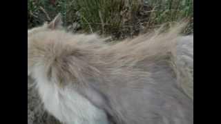 Линька кота
