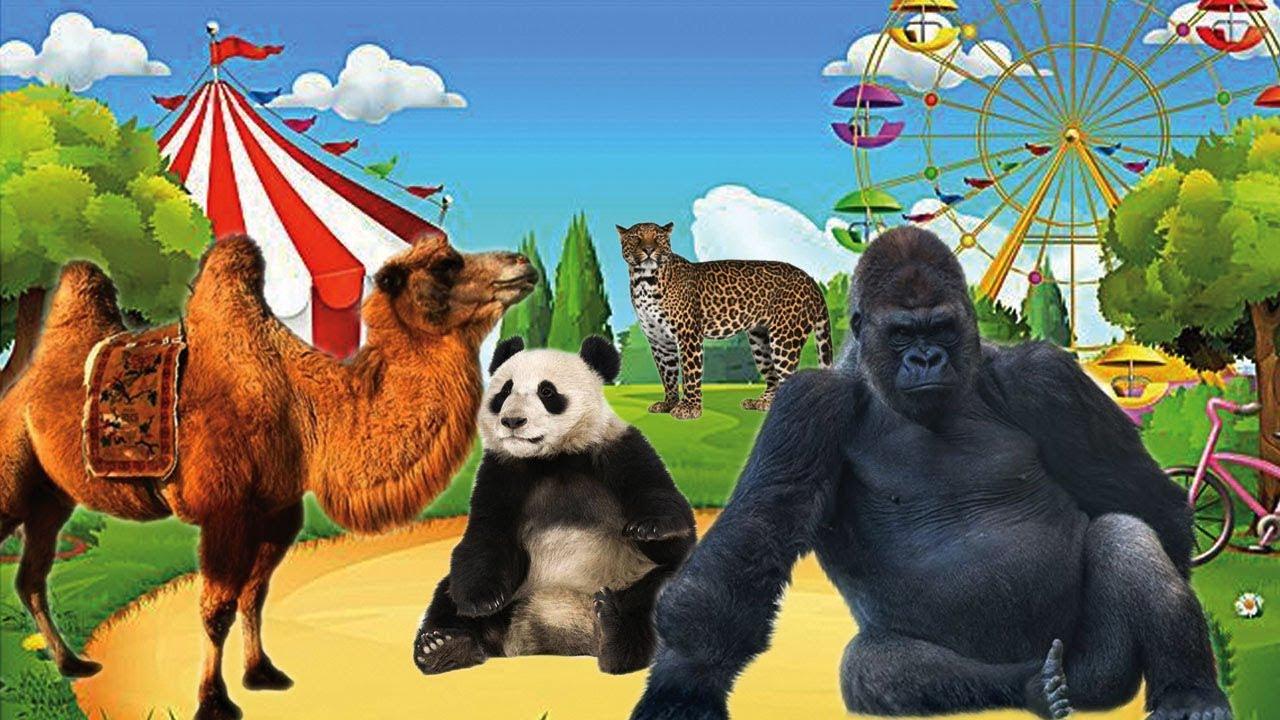 Bài 2. Dạy bé đọc tên các con vật và màu sắc