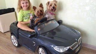 Видео про собак йорков и Машину для малышей электромобиль БМВ, катаем собачек йорков