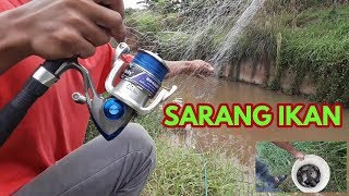 Video Sampe kuwalahan (mancing jaring/spring bom net) di sarang ikan mujair download MP3, 3GP, MP4, WEBM, AVI, FLV September 2018