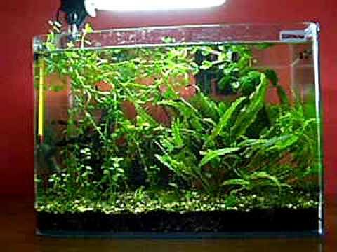 Wave Box 40 aquarium